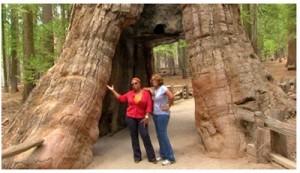 Oprah's big camping adventure in Yosemite National Park