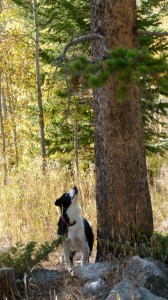 RVer Jimmy Smith reflects on conversations, love of dogs, and listening to the prairie grasses