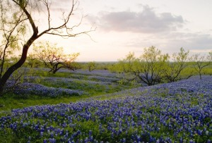 When searching for Bluebonnets in Texas Hill Country, stop by LBJ Ranch, stay at Lady Bird RV Campground