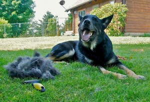 Gift suggestion for RVing pets, # 4 -- 'ShedMonster De-shedding Tool'