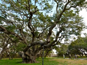 'The Big Tree' perfect RV Short Stop on Texas Gulf Coast