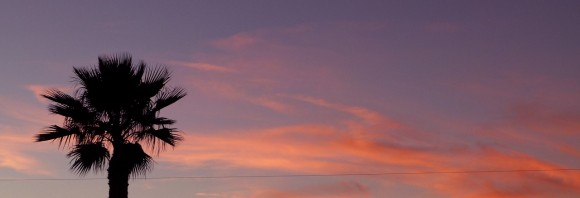 Sunset_palmTree_JulianneGCrane