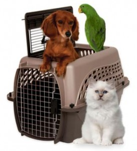 RVing with Pets, part 3 -- 'Safety' is key, says animal behavior expert Diana L. Guerrero