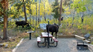 Unusual guests for dinner in Bighorn Mountains