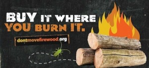 'Buy it where you burn it' — Don't Move Firewood