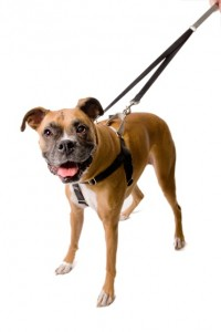 Holiday gift ideas for RVing pets, # 3: Freedom No-Pull Dog Harness