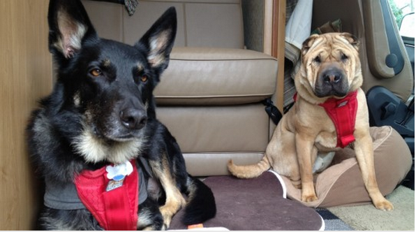 Holiday RV travel with pets, Part 2 — 'Tips for safe, merry and peaceful trips'