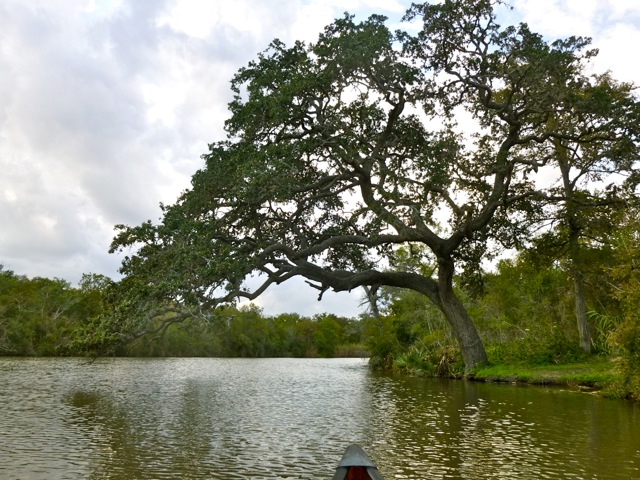 Texas' Palmetto State Park is 'botanical wonderland'