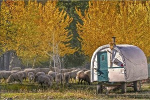 Autumn sheep festival in picturesque Idaho = RV family fun